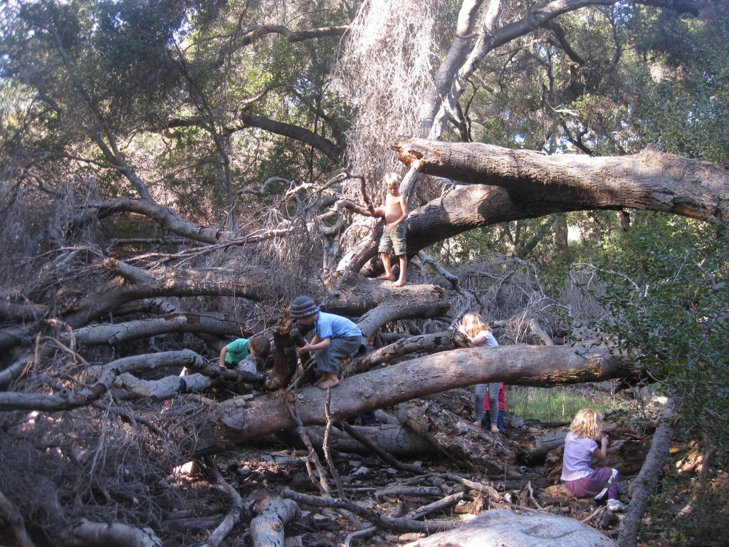 Imaginative play in a favorite fallen oak tree. Best play equipment ever.