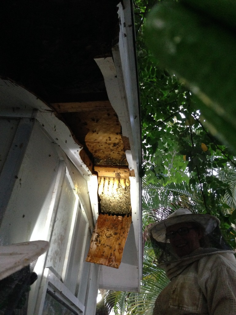 Here's the proof of the size of the hive.